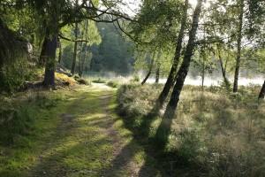 Stig från folkhögskolan till badplatsen genom skön natur med lite morgondimma