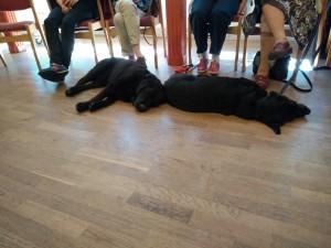 Ledarhundarhundar var det med, och de fick vila medans vi höll på med annat